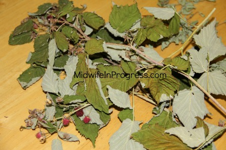 Red Raspberry drying
